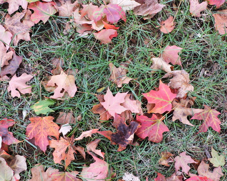 Colorful Autumn Maple Leaves on Grass Stock Photo - 46781230