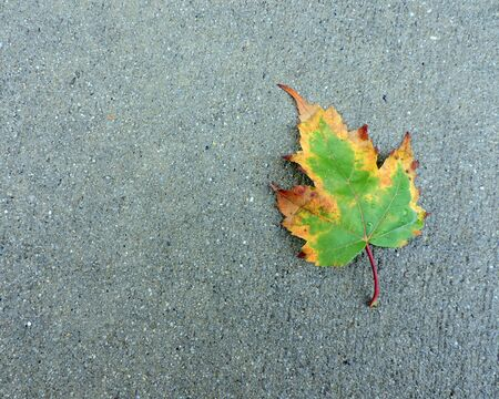 Fallen Autumn Leaf on Sidewalk
