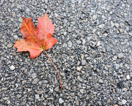 Bright Orange Fallen Autumn Leaf