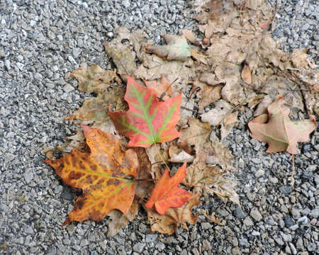 Fallen Autumn Leaves on Street Stock Photo