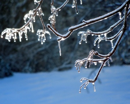 Winter Storm Ice on Tree Branches Stock Photo - 50899714