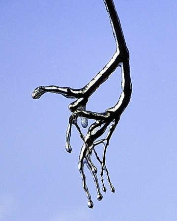 Ice Storm Winter Tree Stock Photo - 50899815