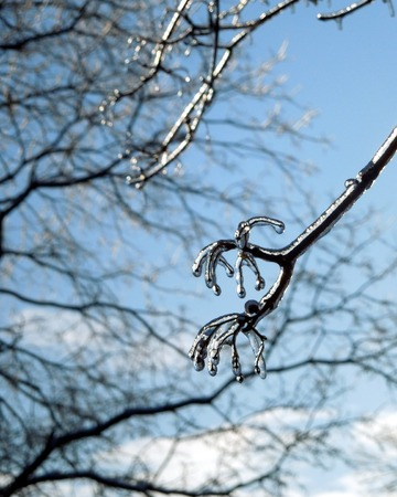 Winter Ice Storm Tree Branch
