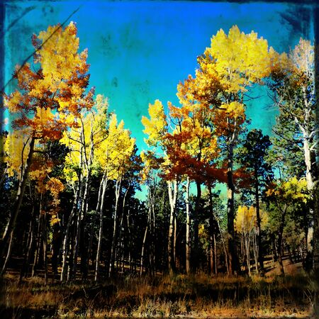 Aspen Forest Scene with Texture