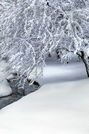 snow covered path in a forest