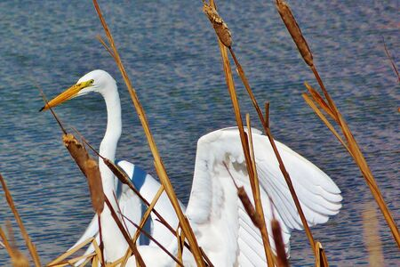 wild birds out in nature Imagens