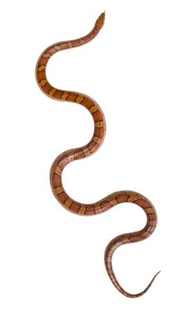 snake eyes: Isolated snake