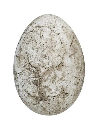 carboniferous: dinosaur egg