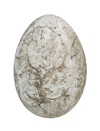 dinosauro: uovo di dinosauro