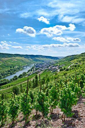 mosel: Mosel river Germany