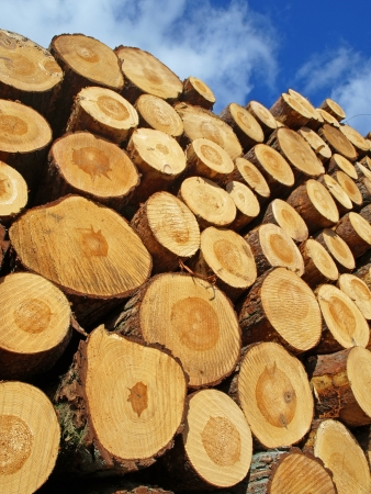 lumber industry: Wood stack Stock Photo