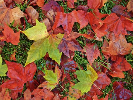 colorful autumn leaves Stock Photo - 18319897