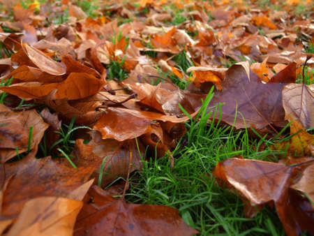 autumn leaves Stock Photo - 18319891