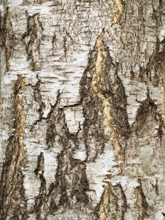 Tree bark detail Stock Photo - 18415902