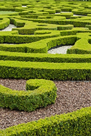 boxwood: An ornamental garden of boxwood