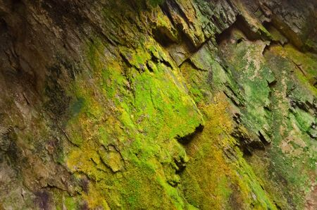 Old cave with green moss walls Stock Photo - 18393496