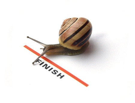 slow: snail heading for the finish line