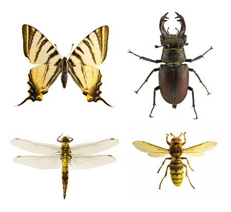 Insect collection photo