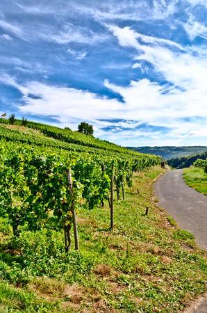 wine road: German vineyard Stock Photo