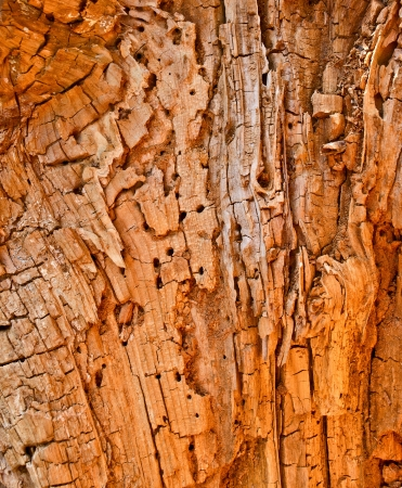 wholes: termite invected tree