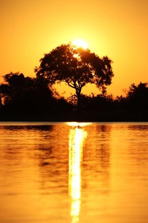 sol: Por do sol africano safari Imagens
