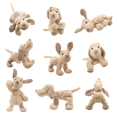 Set of Teddy bear dog positions Stock Photo
