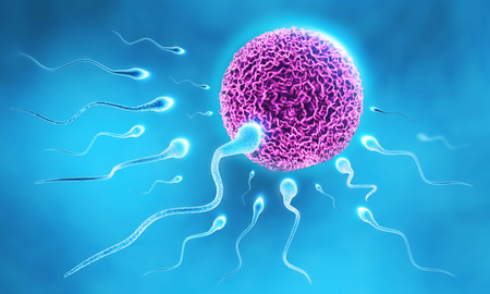 female: 3d illustration of sperm running for the egg