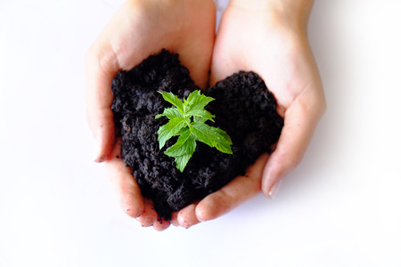 若い植物のための愛とケア 写真素材