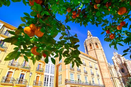 バレンシアは、オレンジの木とスペイン広場・ デ ・ ラ ・ レイナ。
