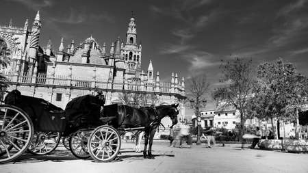 Seville, Spain - 10 February 2020 : Black and White Photography of Horses and Carriages Waiting for Tourists for a ride in Beautiful Seville Spain City Center