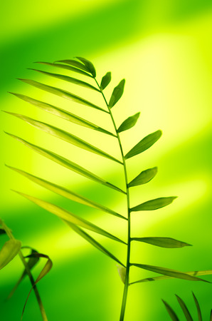 light green background: Green plant on light green background