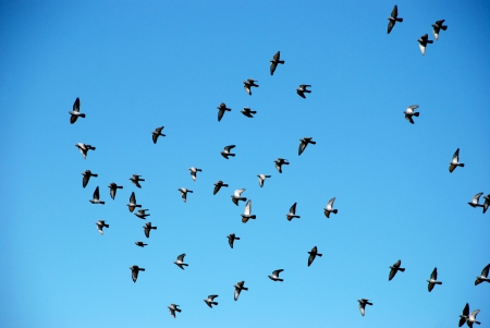Flock of birds on a background of blue sky  photo