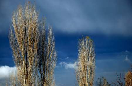 poplars: Dark autumn sky and bare branches of trees