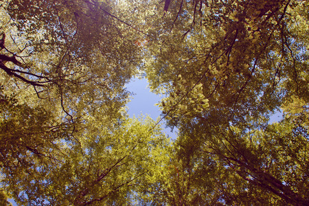 limitless: Looking to the sky between the branches of trees. Stock Photo