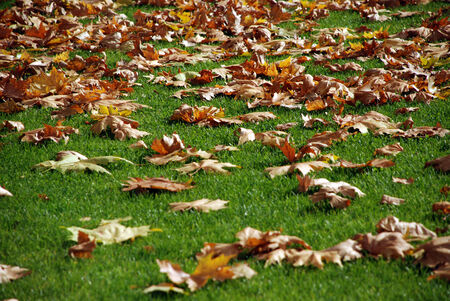 specificity: A simple background of a green grass and dry fallen leaves.