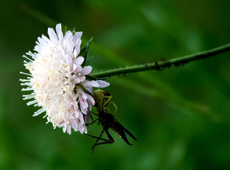 contrastive: White meadow flowers and insects on it on a green background