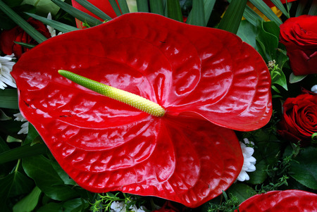 diagonale: Red Anthurium on arrangement of any other flowers.