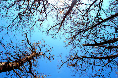 indefinitely: Looking to the sky between the branches of trees. Stock Photo