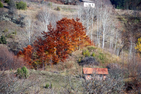 seasonal: Seasonal background of autumn colors. Stock Photo