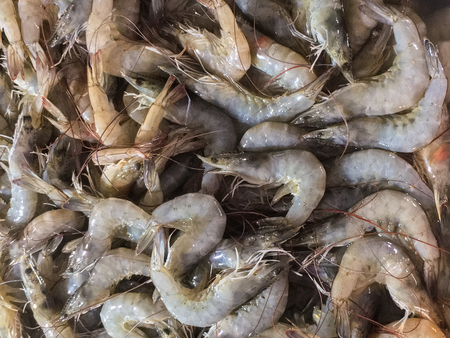 pacific white shrimp, whiteleg shrimp.