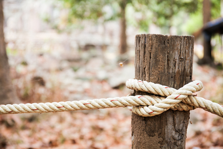 tied in: Rope tied in wooden pole in forest background