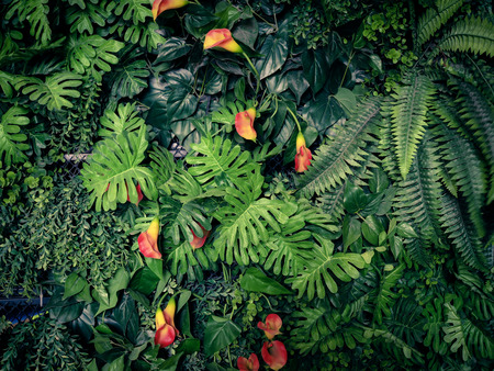 Fashionable green jungle summer background - in exotic vintage tone. Banco de Imagens