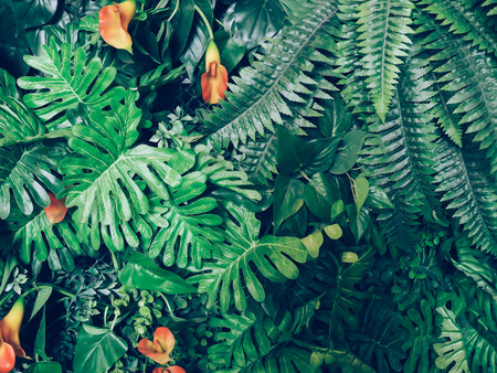 flower leaf: Fashionable green jungle summer background - in exotic vintage tone. Stock Photo