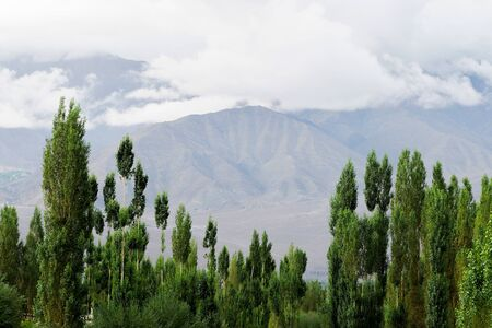 Green trees over mountain background in Leh, Ladakh, India.