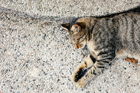 Top view of napping adorable cat sleeping on outdoor ground - with copy space Stock Photo