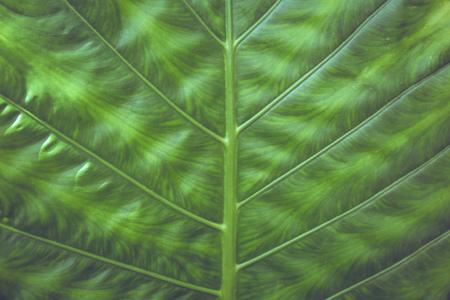 対称のグリーン リーフのテクスチャ背景のクローズ アップ