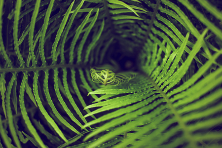 Abstract whirlwind closeup perspective of green fern leaves nature background Stock Photo