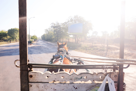 Horse riders eye view on the road