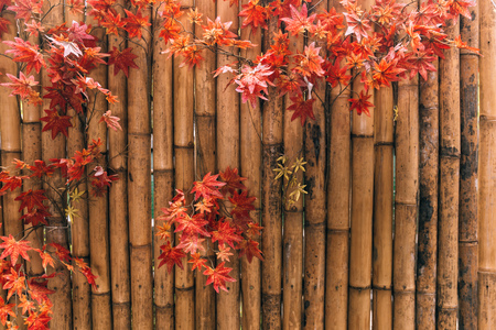 Red Japanese maple autumn leaves decorated with horizontal brown bamboo wooden background