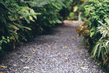 Natural and vibrant evergreen leaves on sidewalk along the rock passage aisle - with copy space Stock Photo
